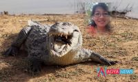 Indonesian scientist eaten alive by 14 foot long pet crocodile