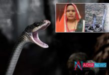 Crime news :UP Woman sits on snakes while talking on phone, gets bitten and dies