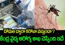 coronavirus is not caused by the mosquito
