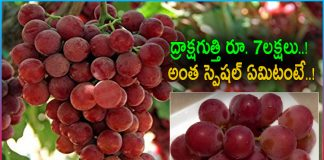 A bunch of grapes fetches more than Rs 7 lakh at Japan auction