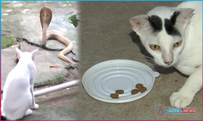 Cat and Snake : Cat is also a faithful animal
