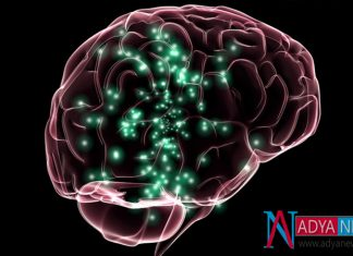 With This Drug , There will cause Huge Damage for Brain : Scientists
