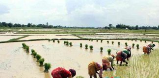 Farmers Submitted Nominations For Not Given Remunerative price for Crops