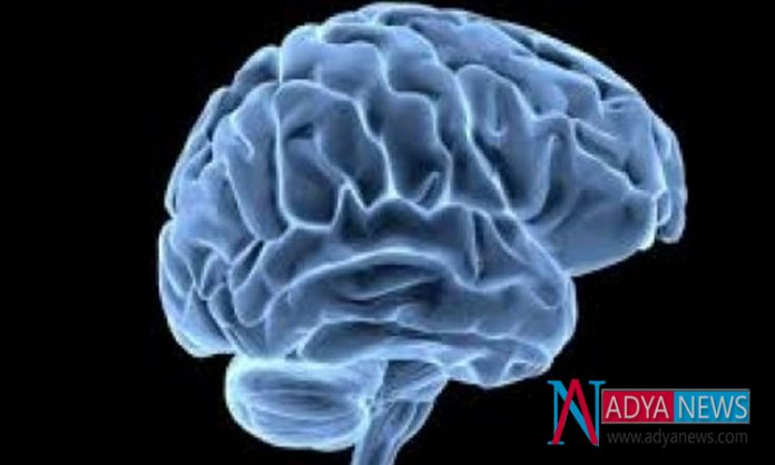 There Will Be No Stop in Developing the Human brain cells