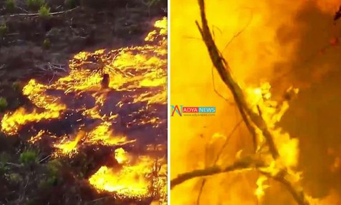 World's Largest Forest Amazon Caught With Fire
