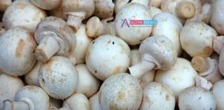 Avoid Cancer Related Problems By Eating Mushrooms Food