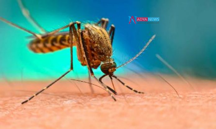 Telanagana People Deaths Continues With The Dengue And Malaria Fevers